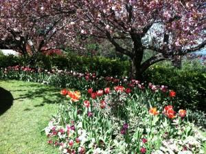 Spring Flowers 2012